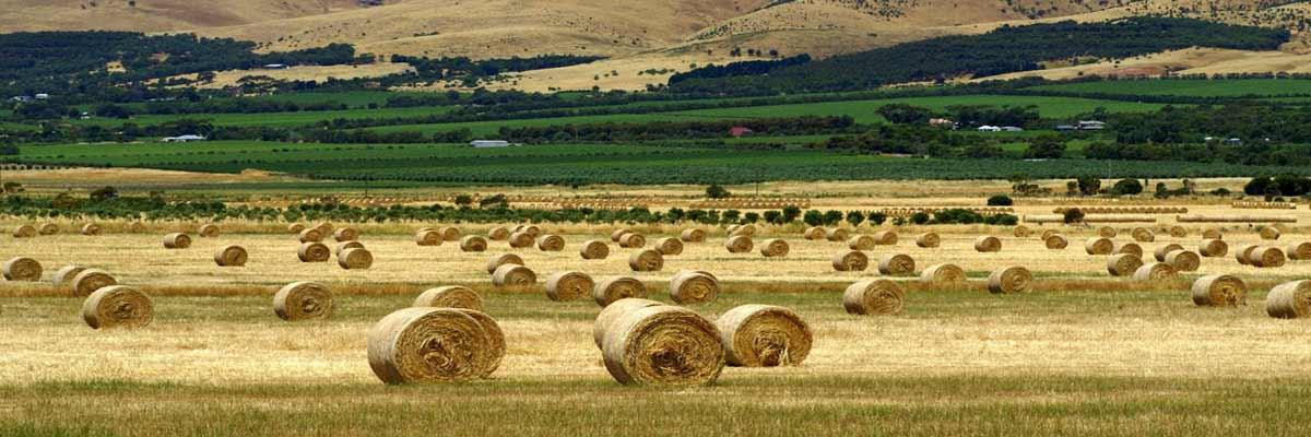Preparing Australian Agriculture