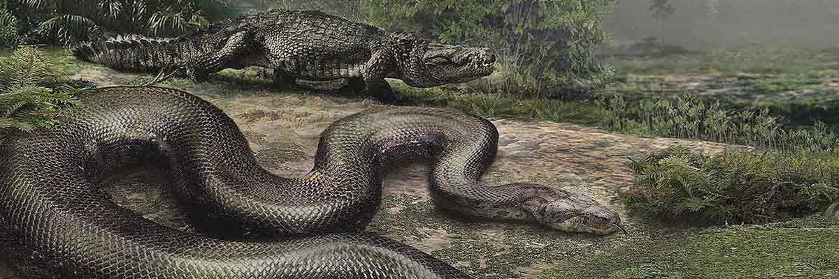 Giant Snake Fossil