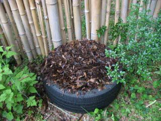 Fill the tire with compost