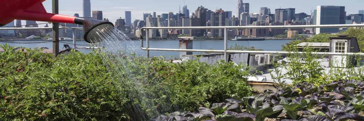 An Urban Agriculture