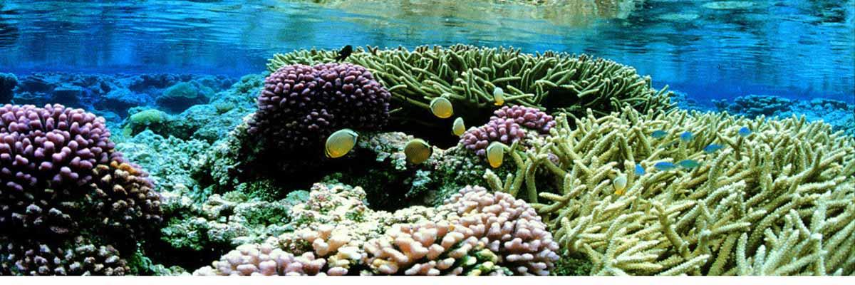 Ocean Preserve