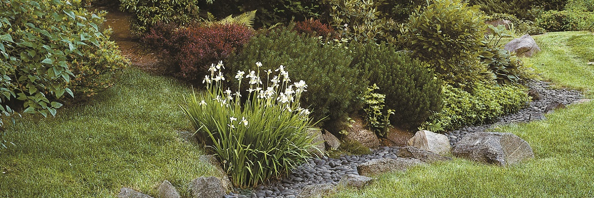 Common Causes Of Landscaped Garden Flooding